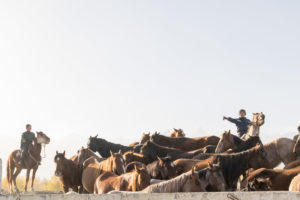 child guiding many horses in Kyrgyzstan