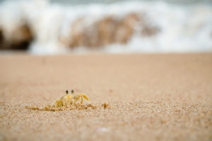 a crab coming out of the beach