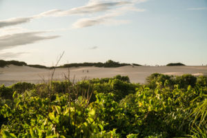 a vegetation and the dunes in Itaunas