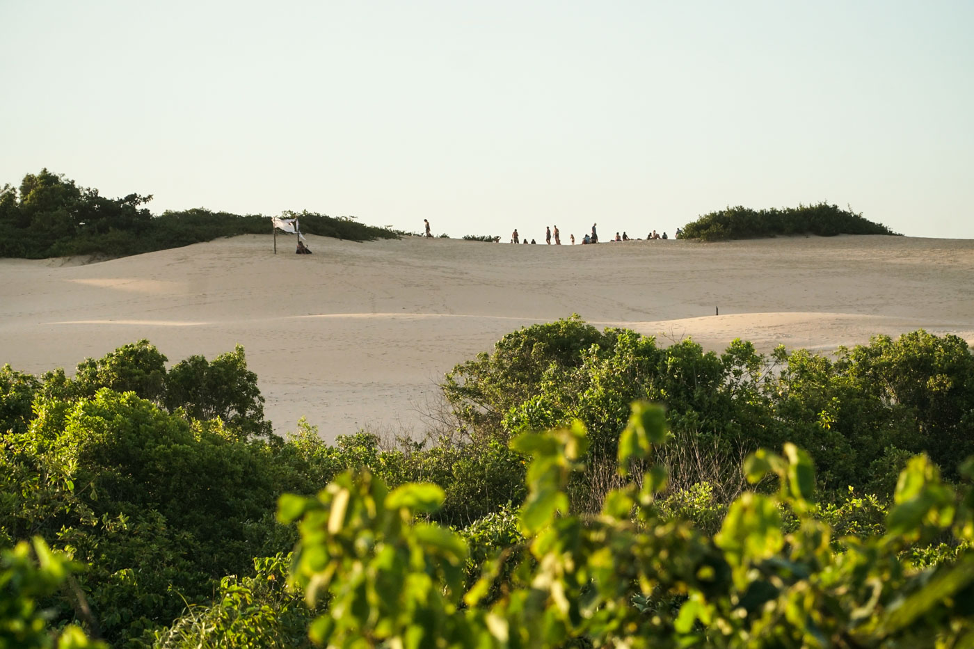 vegetation in front of the dunes of Itaunas