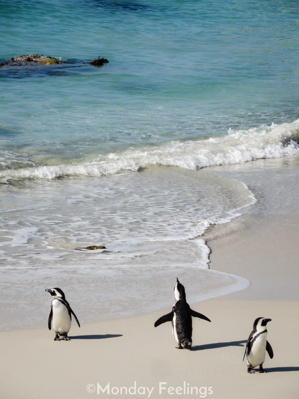 Visiting Boulders Beach, one of the unmissable things you should do in South Africa